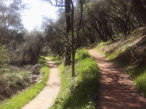 Dragoon Trail