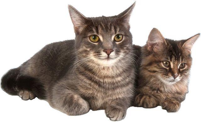 Cat Rescue Webcams