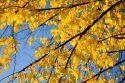 Leaves - Fall
