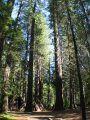 Calaveras Big Trees Park