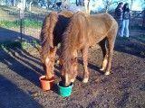 Two Horses Photo courtesy of Raquelle Van Vleck
