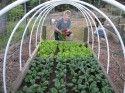 Belochi veggie garden