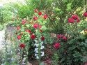Rose Lenzo and Larry Hunter Garden