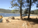 Pinecrest Lake water levels