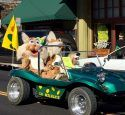 Sonora High Wildcats Mascots Homecoming Parade 2015