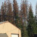 Dead trees along HWY 108