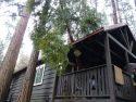 Cedar-tree-into-Twain-Harte-home-Feb. 17-2017-Lauralee-Brown-Photo