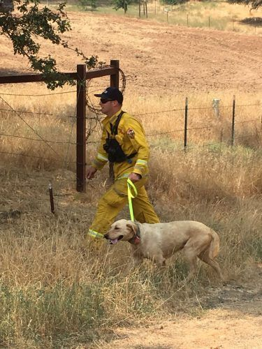 CAL-Fire-rescues-dog-near-Detwiler-Fire-and-will-have-animal-rescue-group-reunite-the-pet-with-its-family