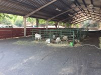 Sonora's Mother Lode Fairgrounds Red Cross Evacuation Center, Image July 20, 2017