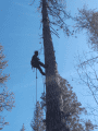 Tree removal project on Big Creek Shaft Road Feb 2018