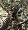Bear At Star Mobile Estates