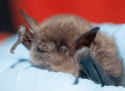 Protecting Bats Ahead Of Bridge Work