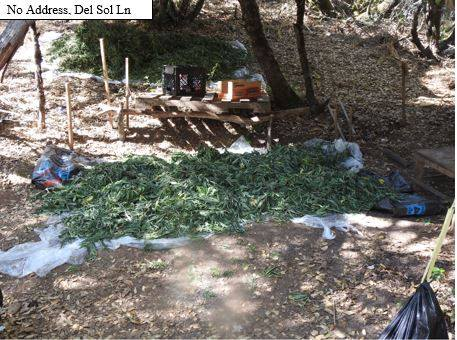 Eight Illegal Grow Busts Net Thousands Of Pot Plants, Five