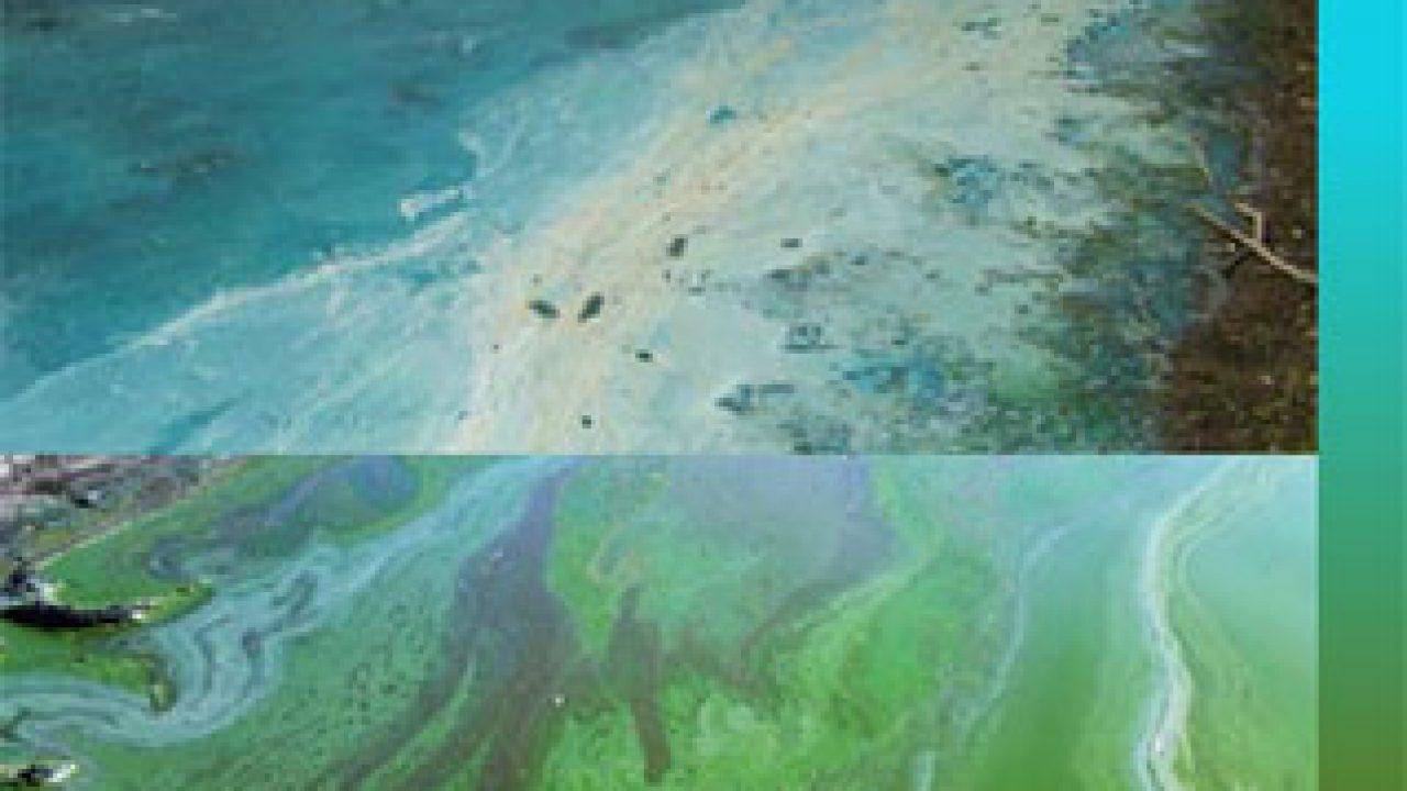 Testing Result Mistake Confirms Harmful Algae In Calaveras County Pond